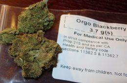 blackberry medical dispensary cannabis