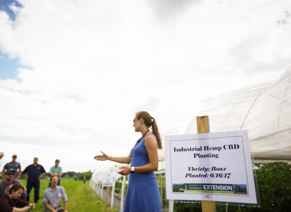 vermont-cannabis-marijuana-hemp-university-of-vermont-extension-agriculture-borderview-farm-cbd-field-day-04