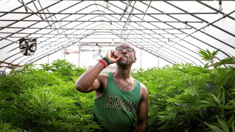 Cannabis Legalization Celebration Vermont