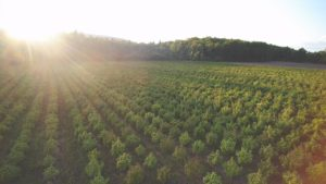 preview of Vermont CBD Hemp Fields From Above